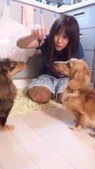 Chisato y perros